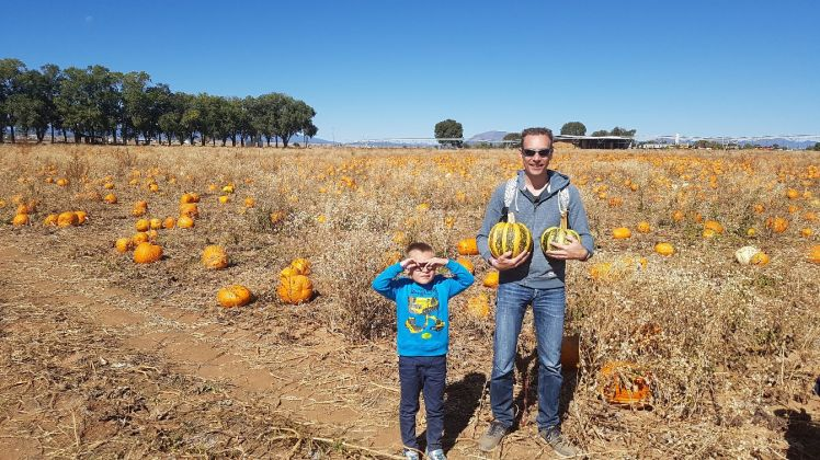 Mc Calls pumpkinpatch